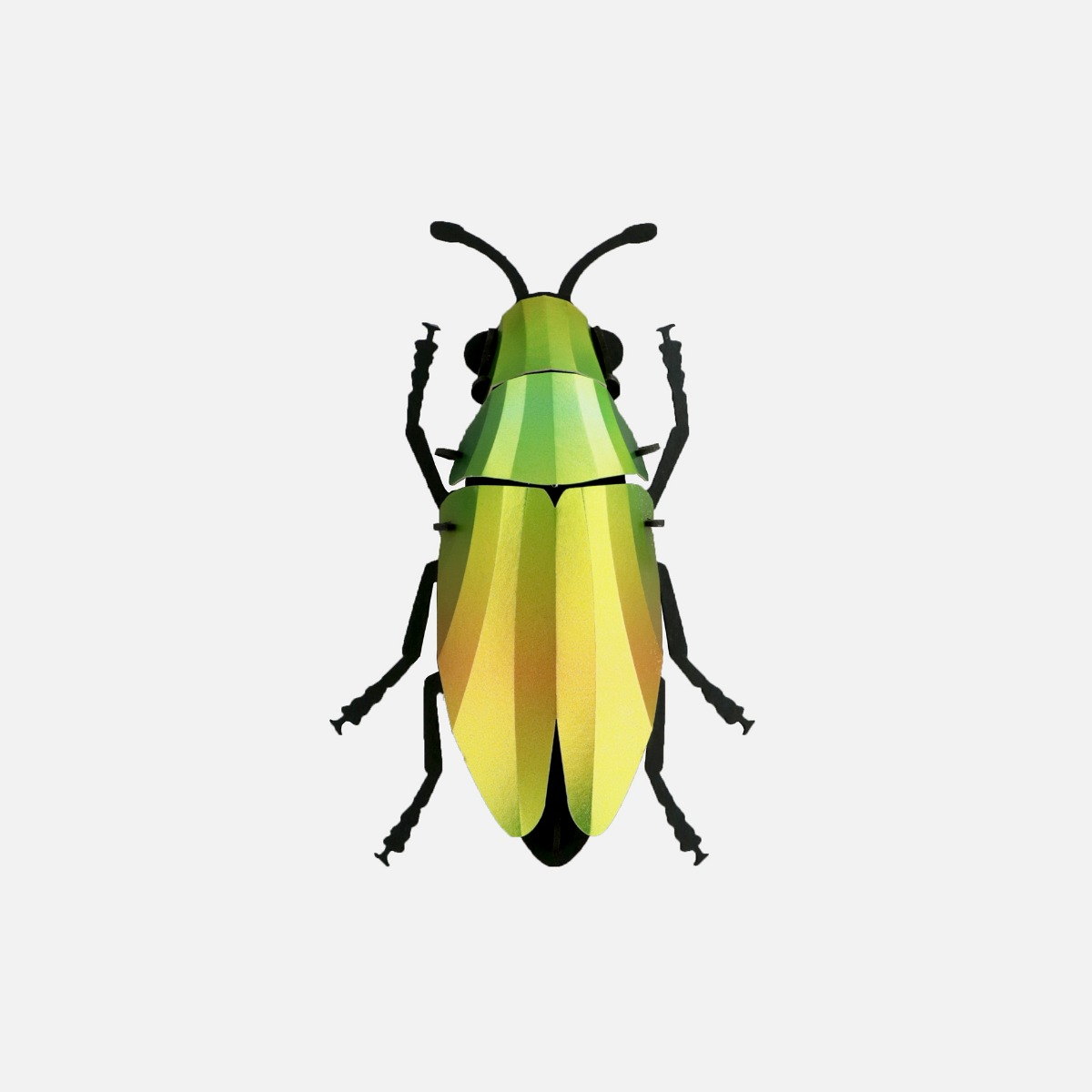 Jewel Beetle puzzle