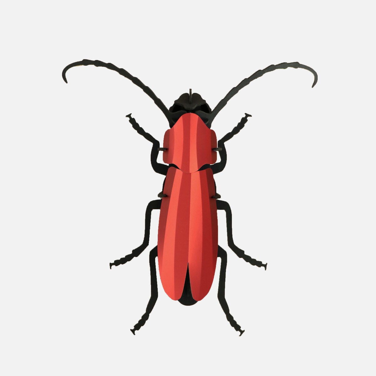 Rosalia Beetle puzzle